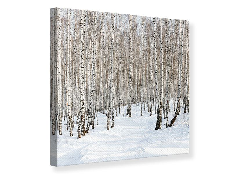 Leinwandbild Birkenwald-Spuren im Schnee