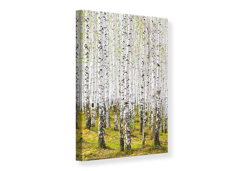 Leinwandbild Der Birkenwald im Frühling