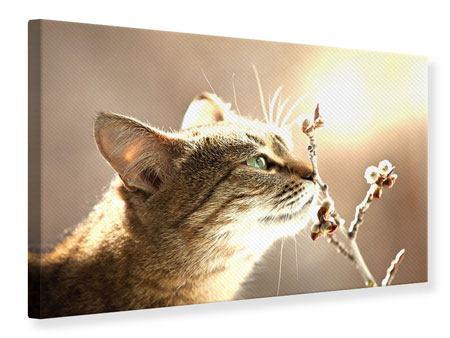 Leinwandbild Die Katze