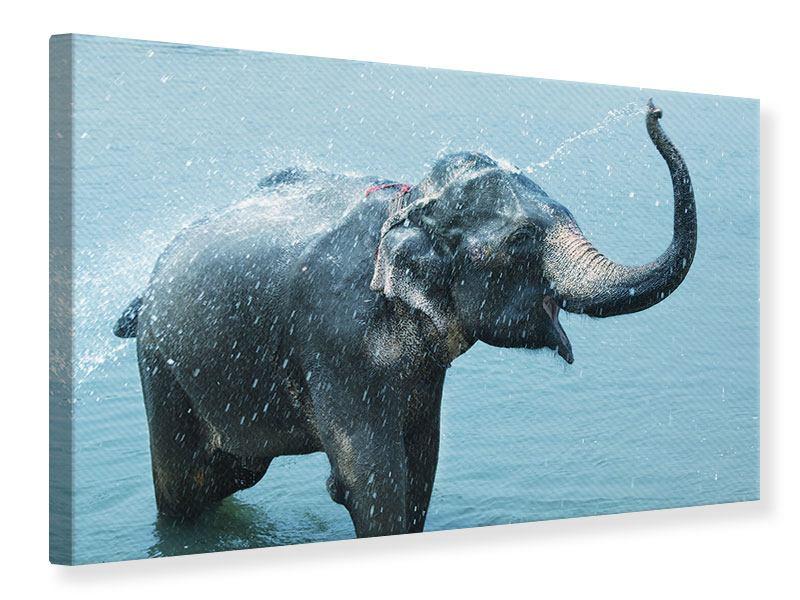 Leinwandbild Der junge Elefant