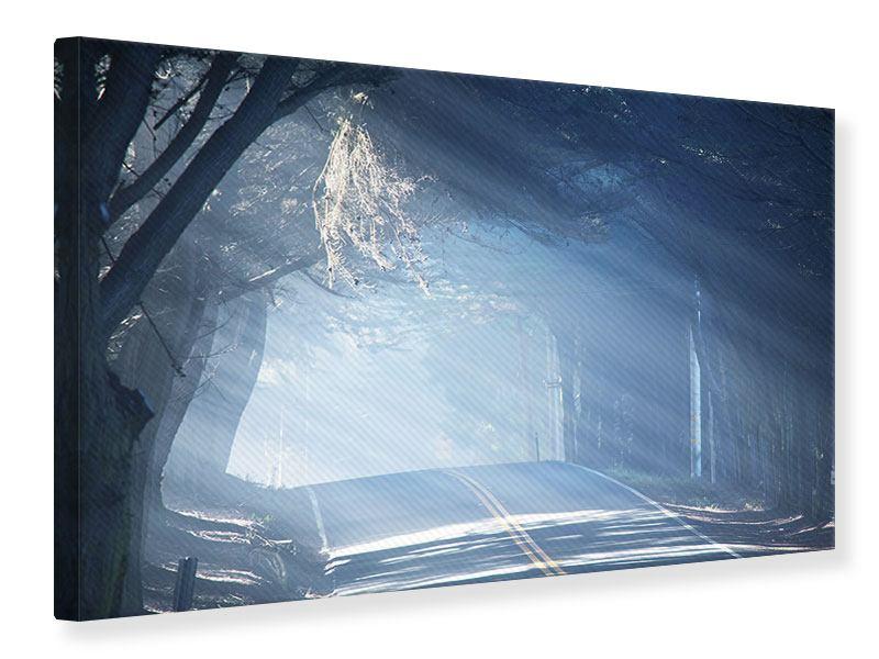 Leinwandbild Lichtdurchflutete Baumallee
