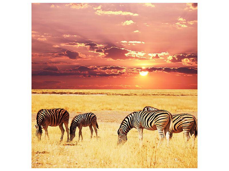 Leinwandbild Zebras in der Savanne