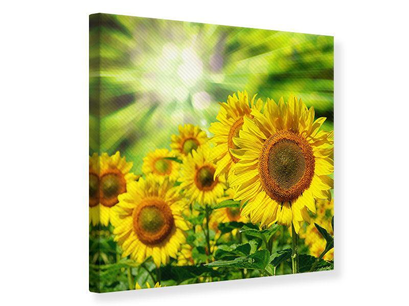 Leinwandbild Die Sonne und die Blumen