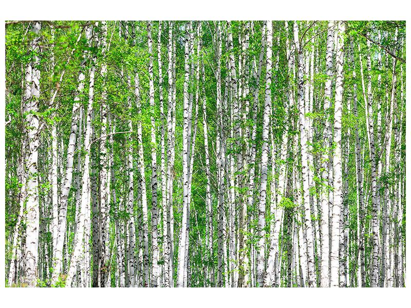 Leinwandbild Der Birkenwald