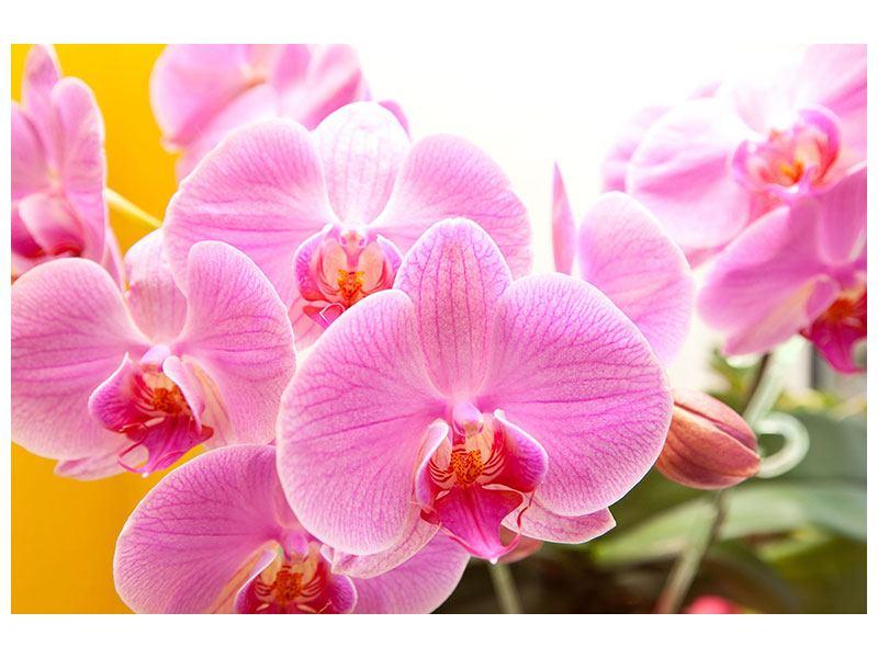 Leinwandbild Königliche Orchideen