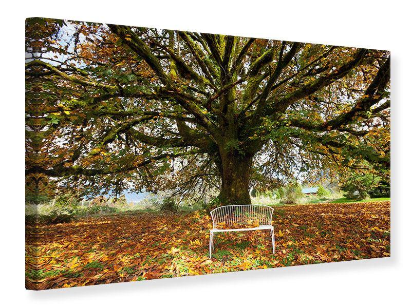 Leinwandbild Mein Lieblingsbaum
