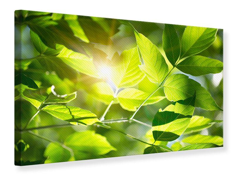 Leinwandbild Es grünt so grün