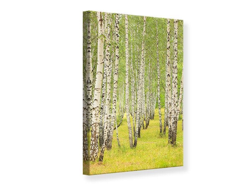 Leinwandbild Der Birkenwald im Spätsommer