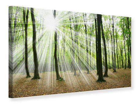 Leinwandbild Magisches Licht in den Bäumen
