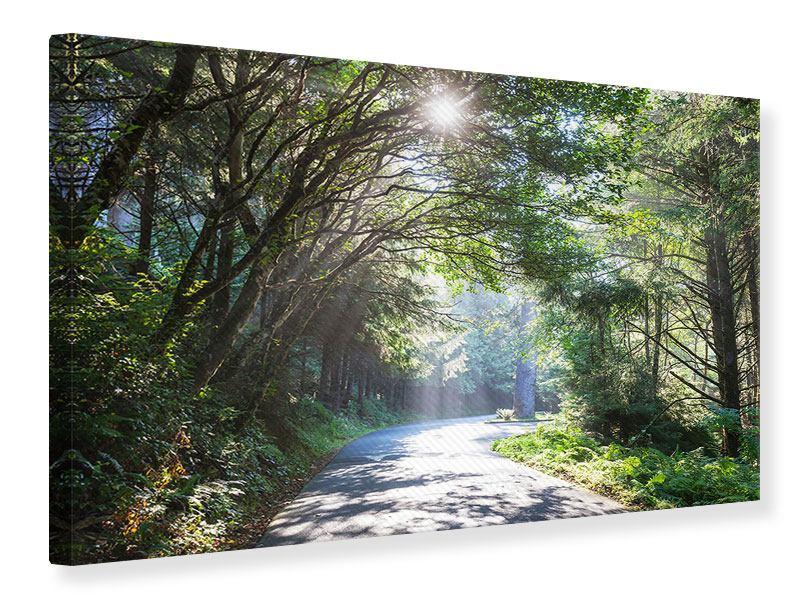 Leinwandbild Sonniger Waldweg