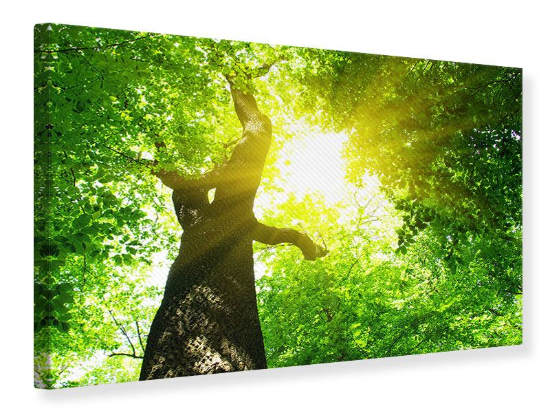 Leinwandbild Baum