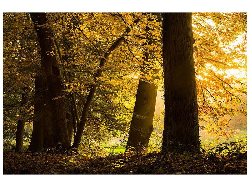 Leinwandbild Herbstlaub