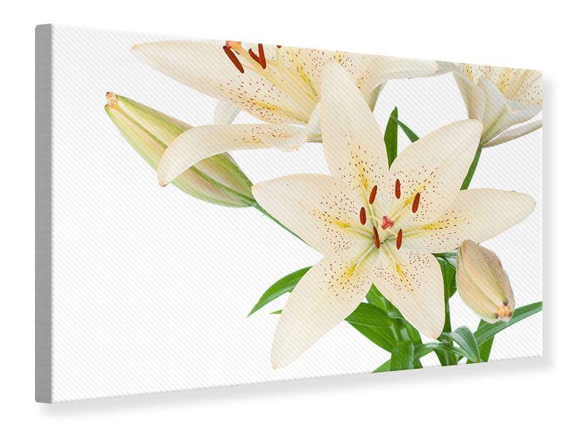 Leinwandbild Weisser Lilienstrauch