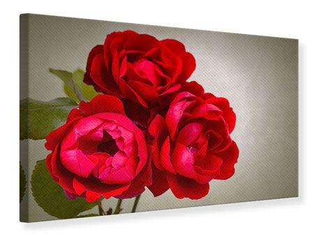 Leinwandbild Drei rote Rosen