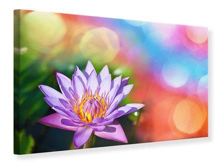 Leinwandbild Colored Lotus