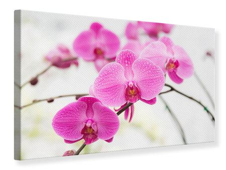 Leinwandbild Das Symbol der Orchidee