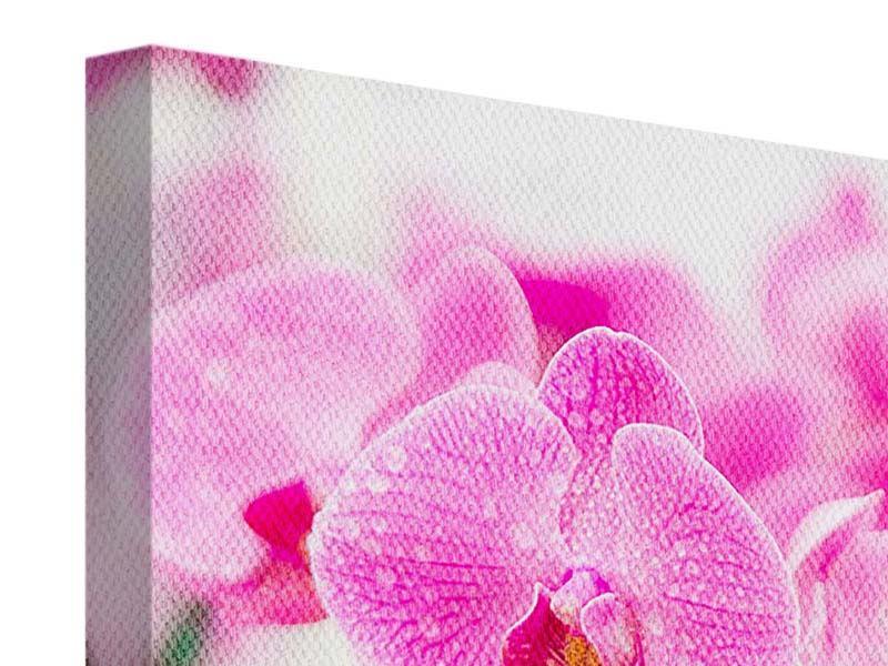 Leinwandbild Gestreifte Orchideenblüten in Rosa