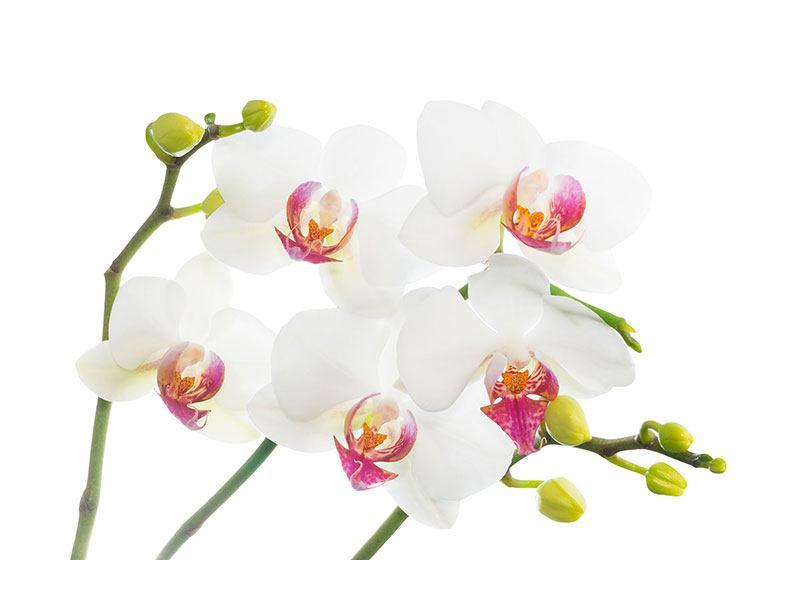 Leinwandbild Orchideenliebe