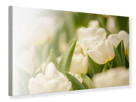 Leinwandbild Tulpenperspektive