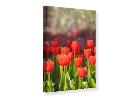 Leinwandbild Das rote Tulpenbeet