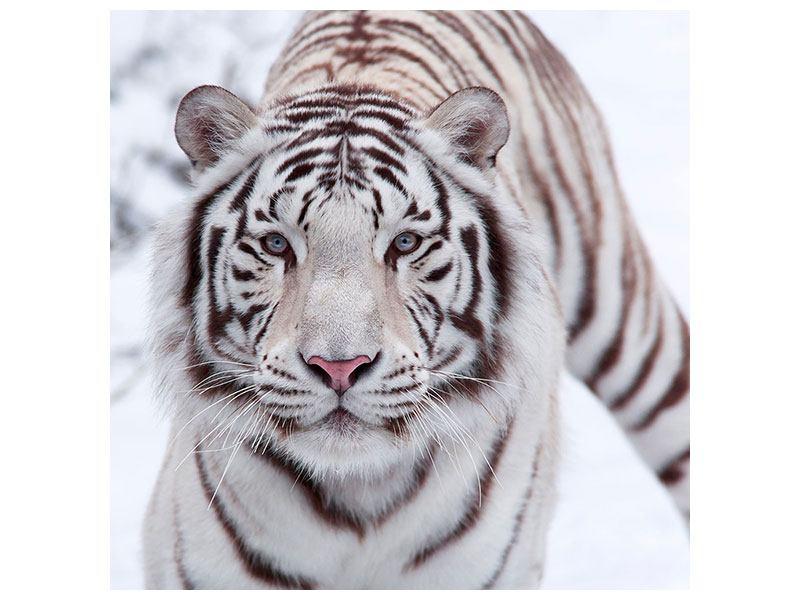 Leinwandbild Der Königstiger