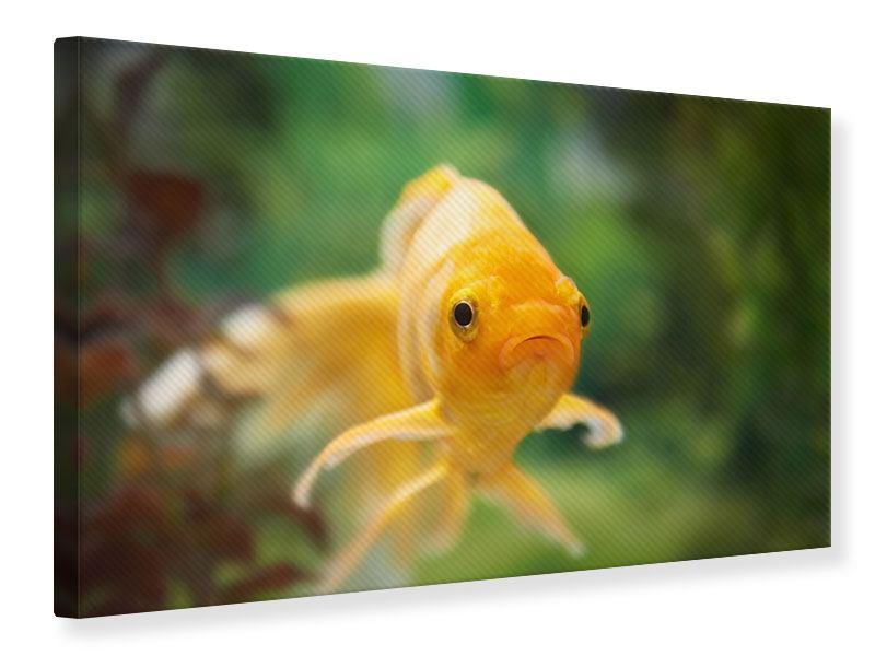 Leinwandbild Der Fisch