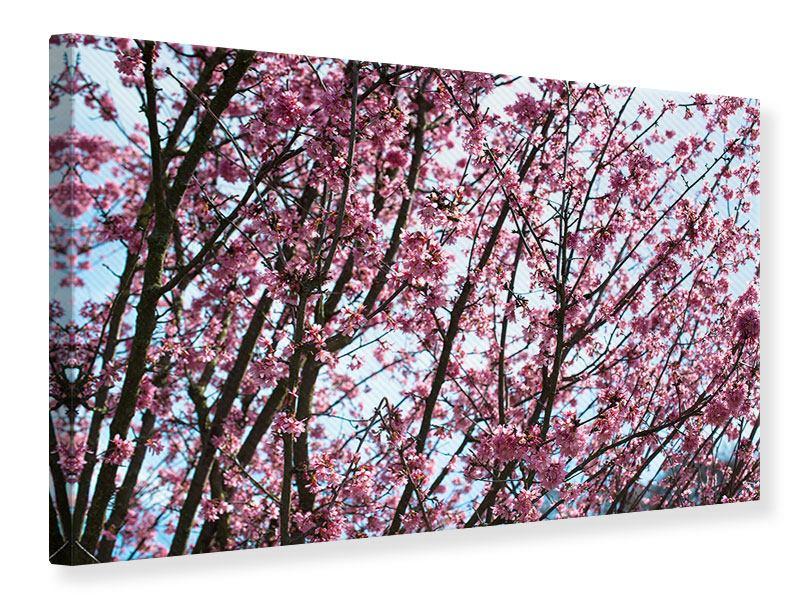 Leinwandbild Japanische Blütenkirsche