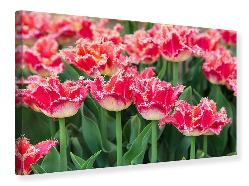 Leinwandbild Die Tulpenwiese