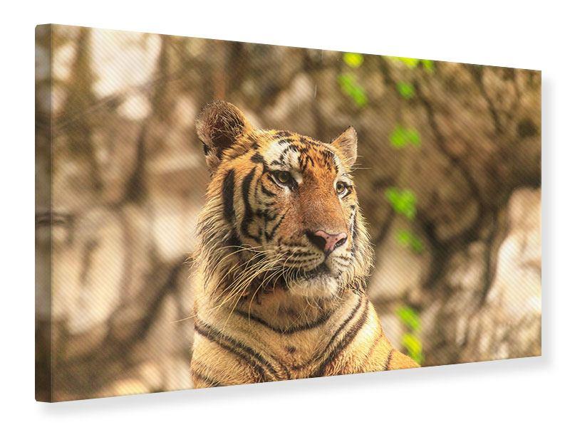 Leinwandbild Tiger