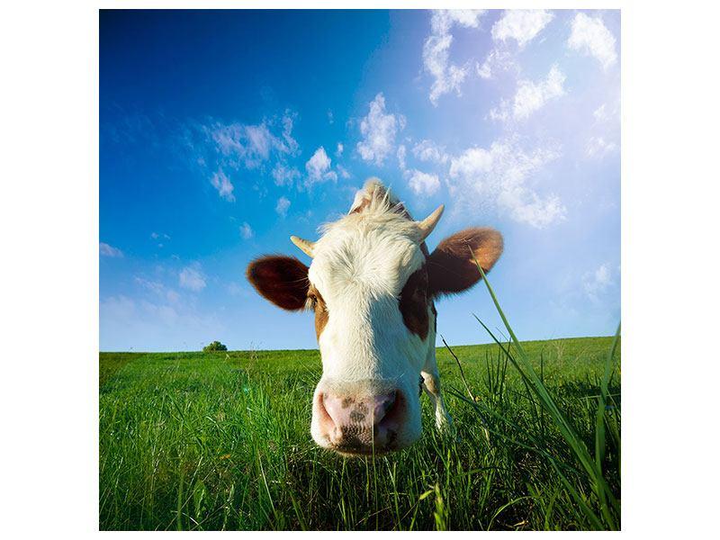 Leinwandbild Die Kuh