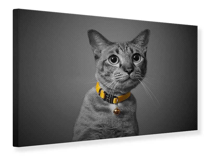 Leinwandbild Katzenlady
