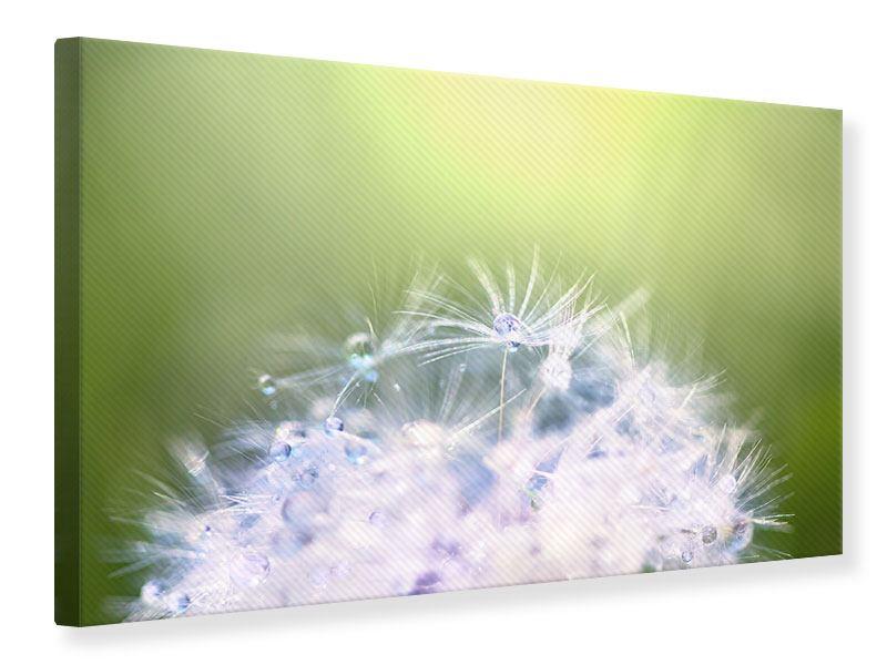 Leinwandbild Pusteblume XL im Morgentau