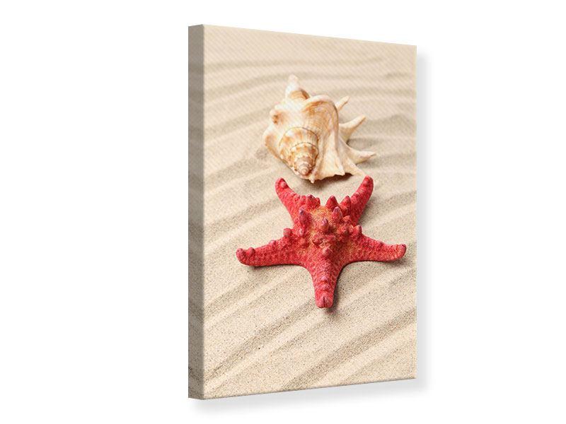 Leinwandbild Die Muschel und der Seestern