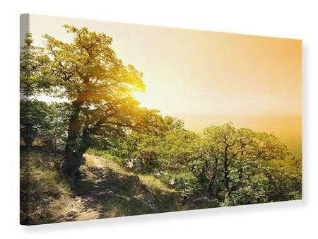 Leinwandbild Sonnenuntergang in der Natur