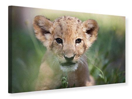 Leinwandbild Das Löwenbabay