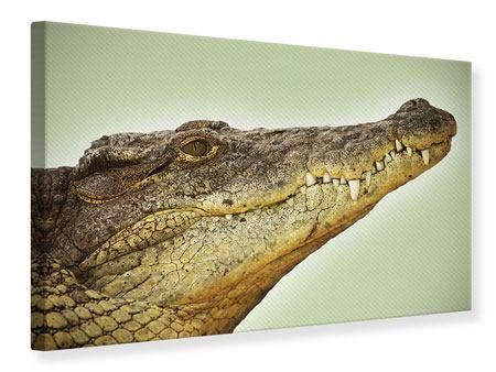 Leinwandbild Close Up Alligator