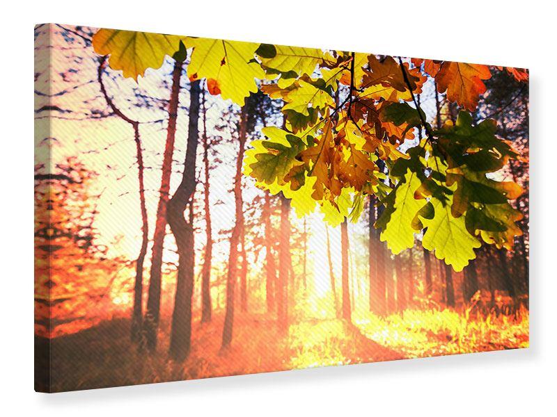 Leinwandbild Herbst