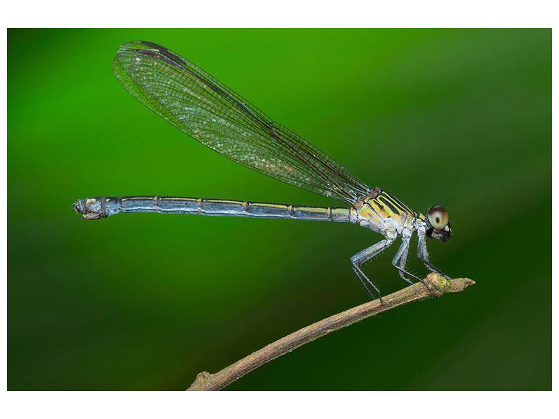 Leinwandbild Die Libelle