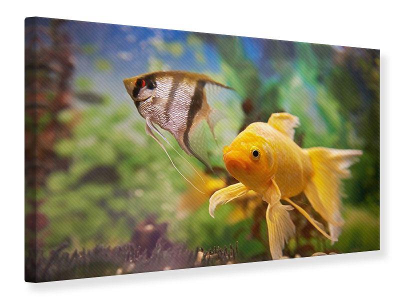Leinwandbild Bunte Fische
