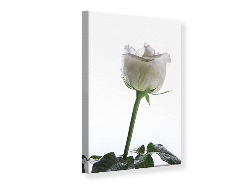 Leinwandbild Im Namen der Rose