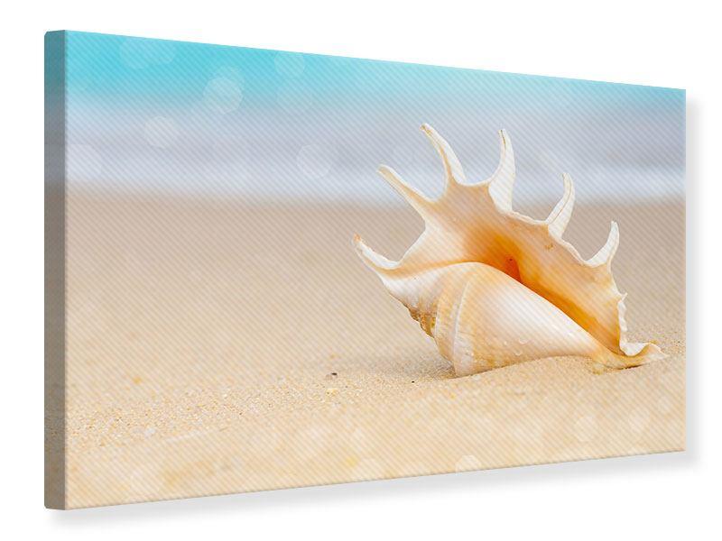 Leinwandbild Die Muschel am Strand