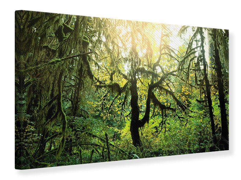 Leinwandbild Verträumter Wald