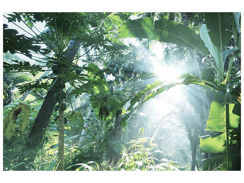 Leinwandbild Dschungelstar