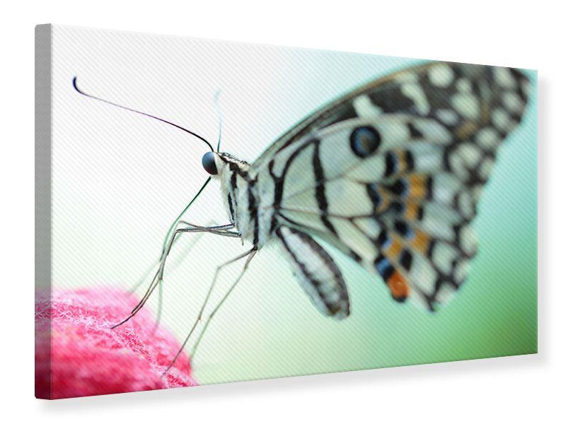 Leinwandbild Schmetterling XXL