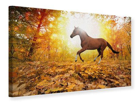 Leinwandbild Vollblut im Herbstwald