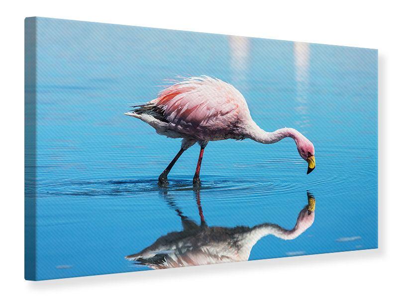 Leinwandbild Der Flamingo