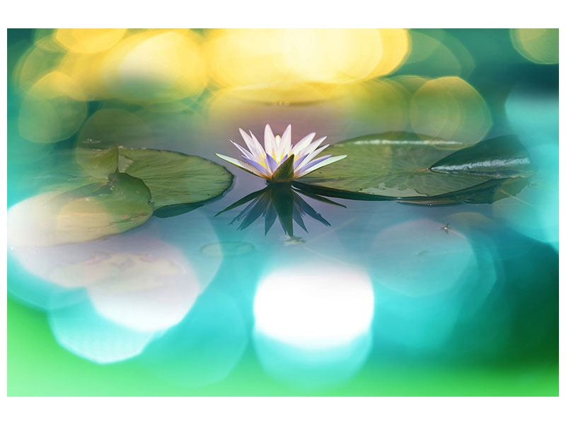 Leinwandbild Lotus-Spiegelung