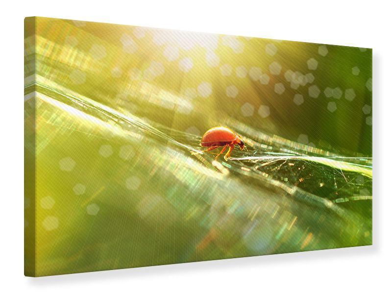 Leinwandbild Marienkäfer im Sonnenlicht