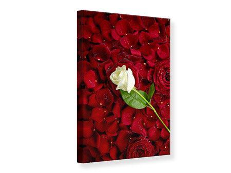 Leinwandbild Auf Rosen gebettet