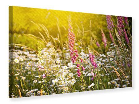Leinwandbild Sommerliche Blumenwiese